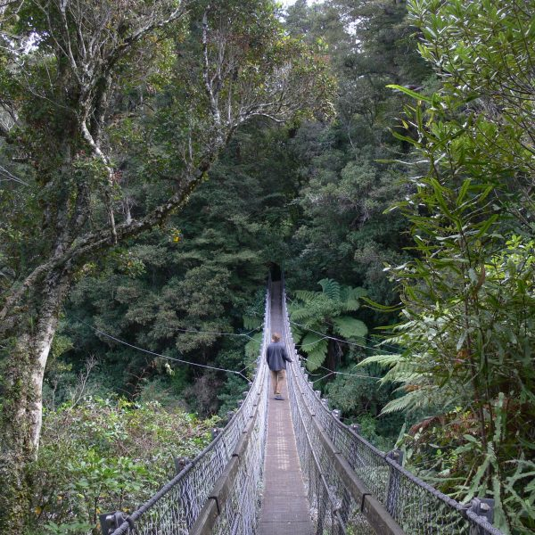 Kaitoke Regional Park swing bridge