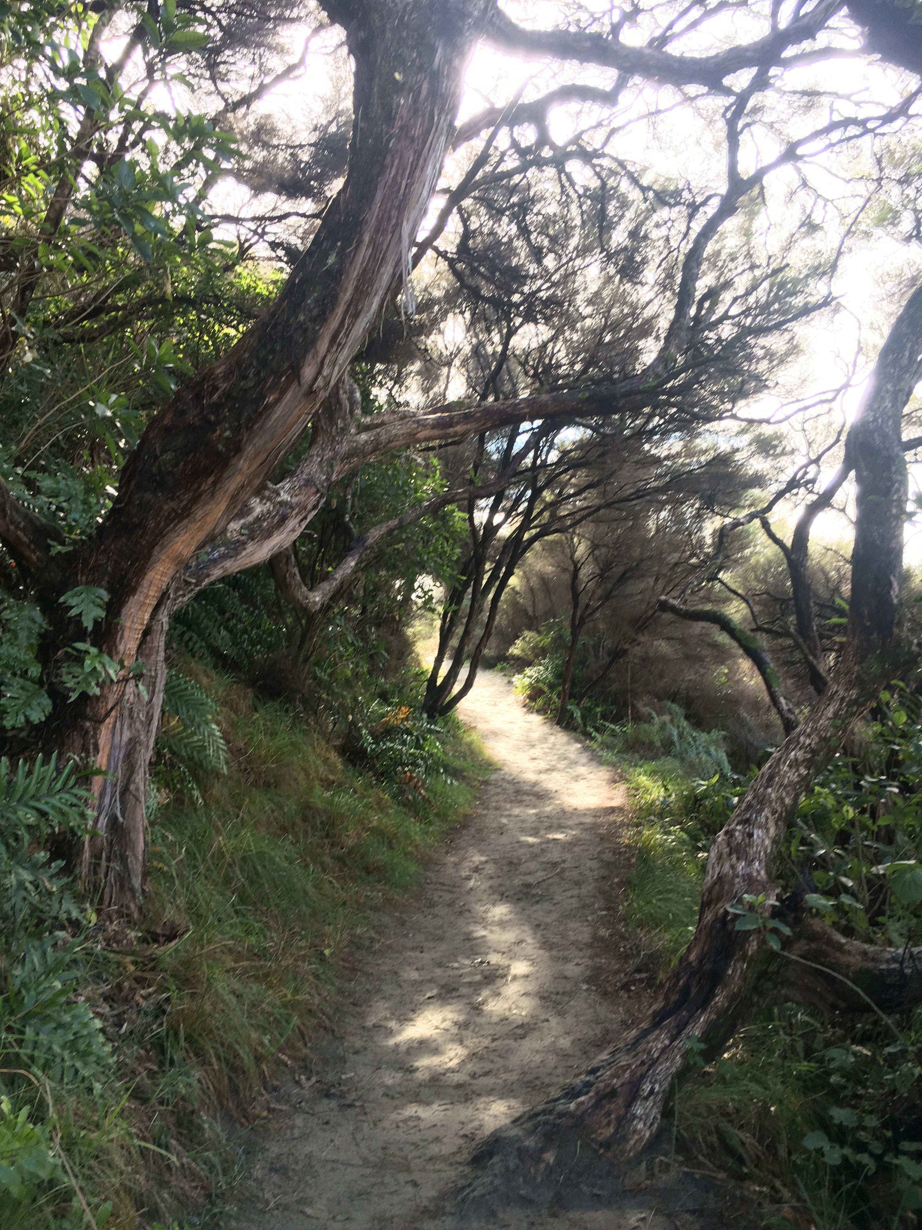 Forest Path to Wharariki Beach