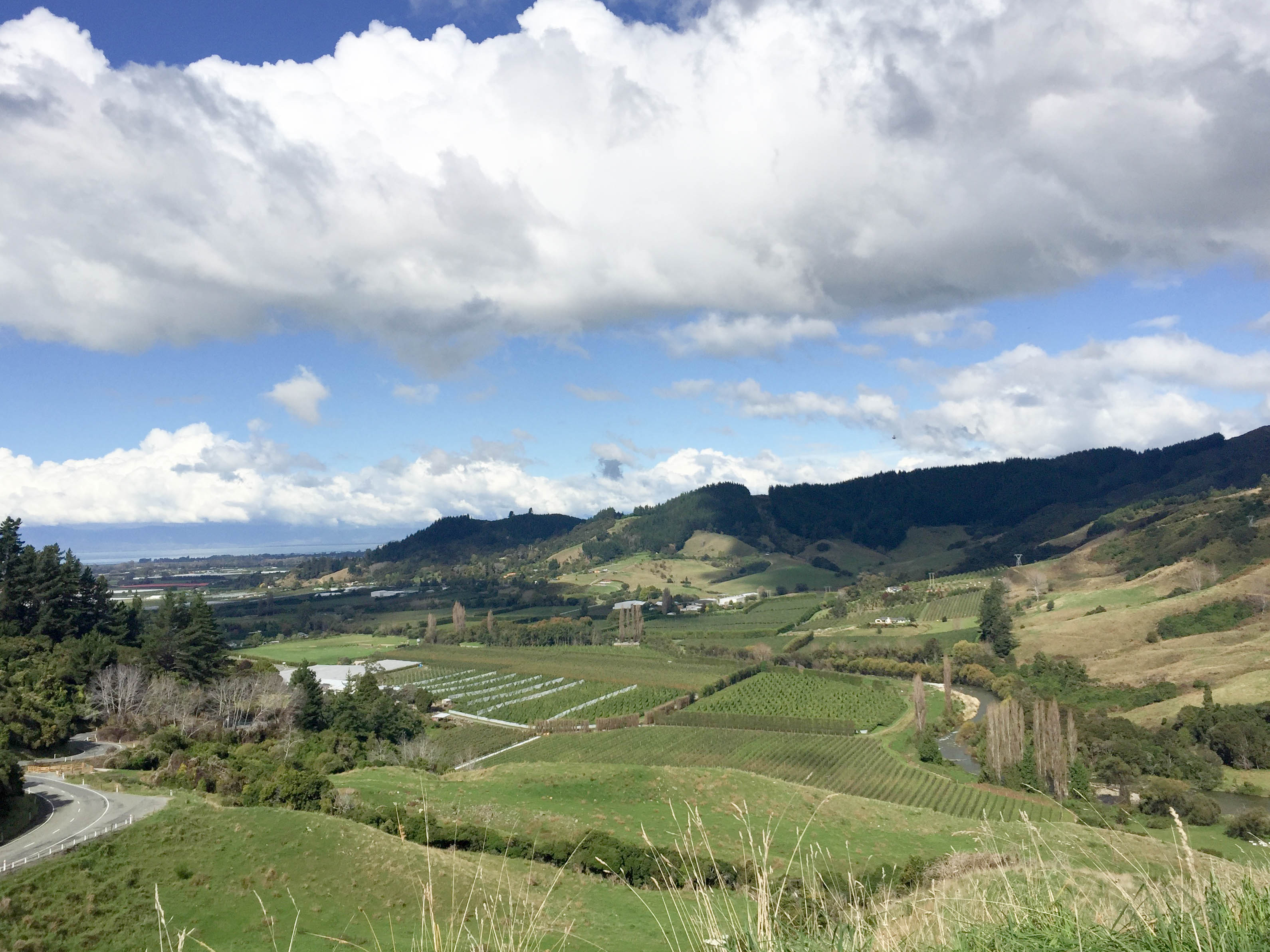 Hop Farms Views Before Takaka Hill