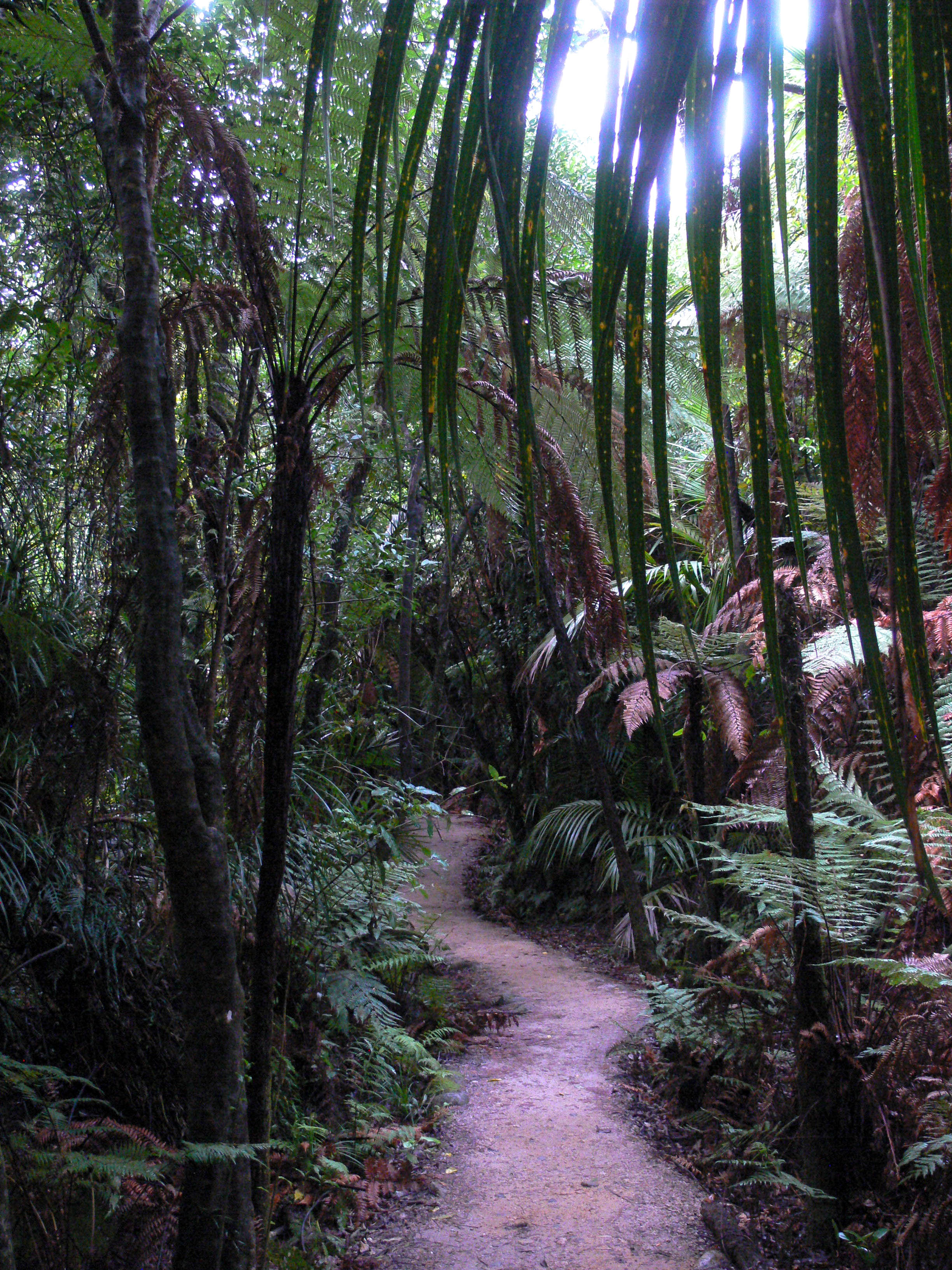 Wainui Falls Hiking Path with Sunlight