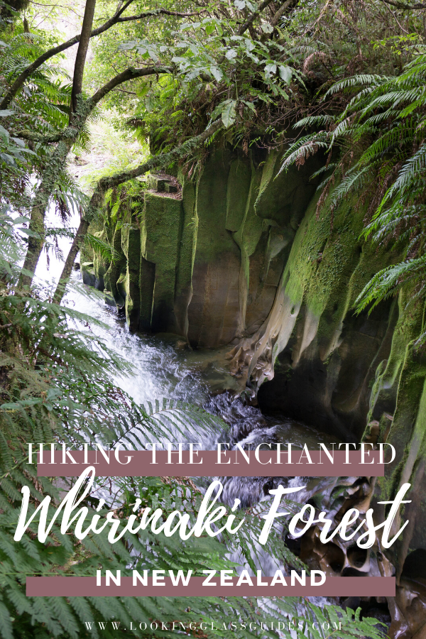 Hiking in the Whirinaki Forest