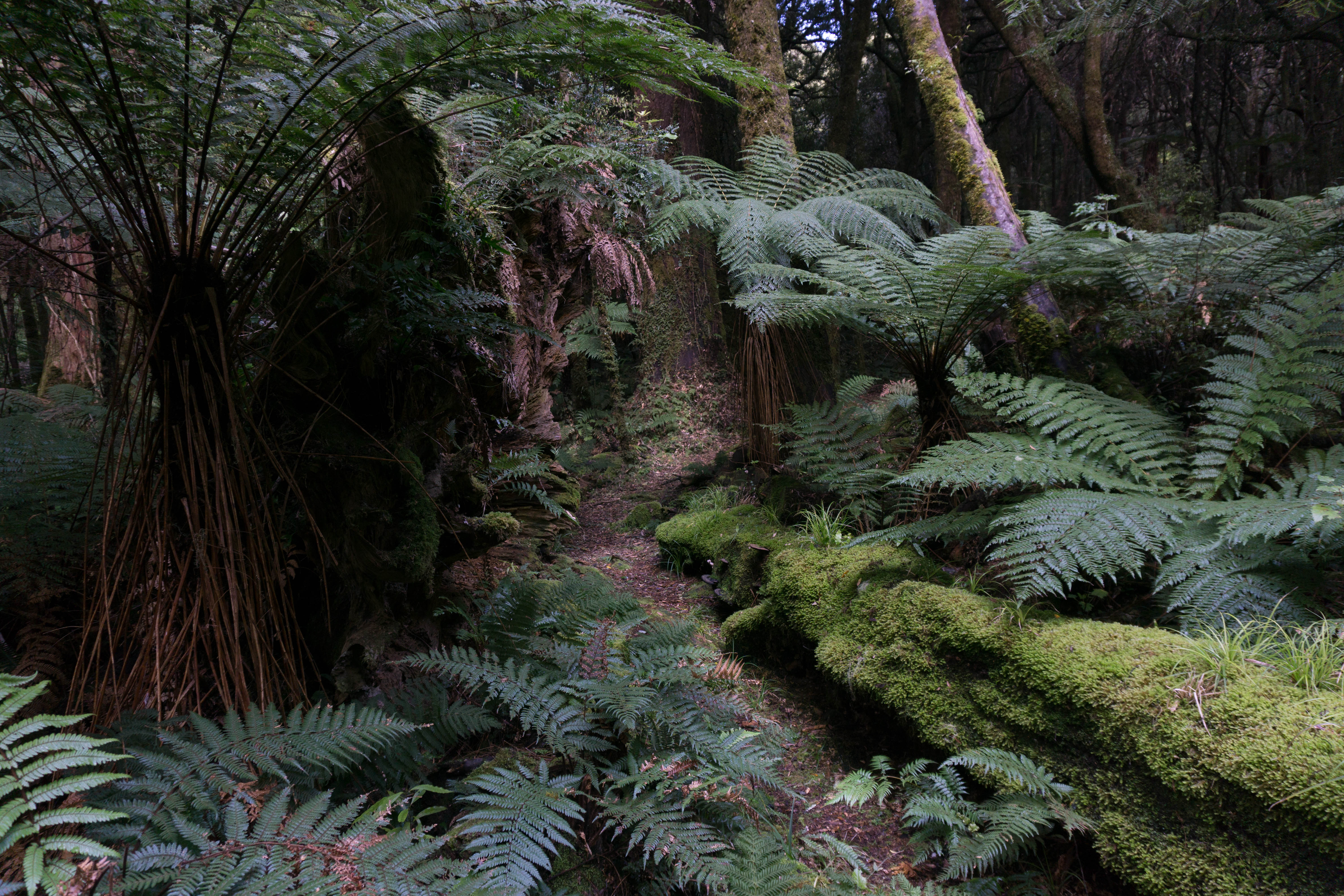 Moody ferns and moss in the Whirinaki Forest