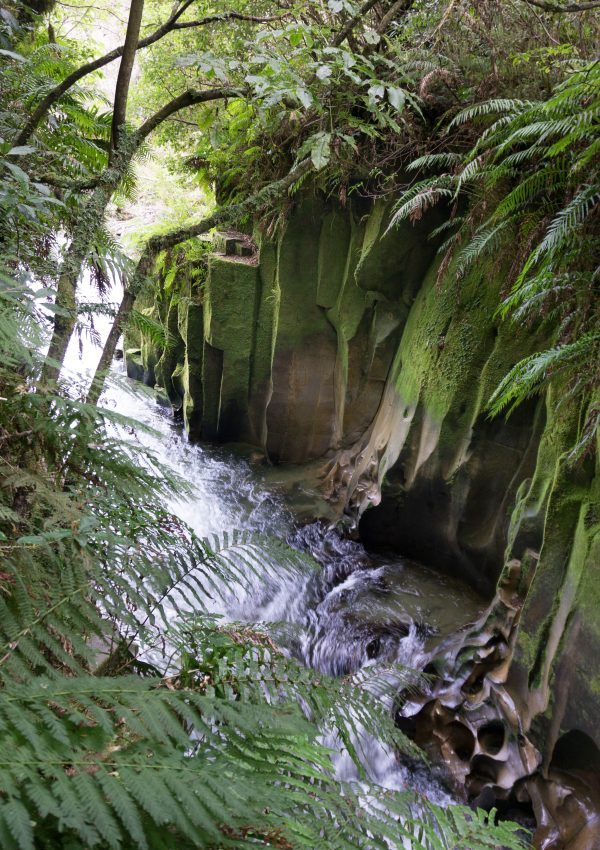 Te Whaiti Nui a Toi Canyon Whirinaki
