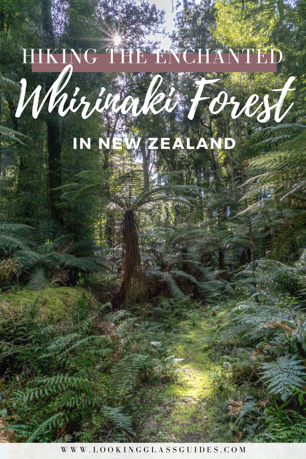 Whirinaki Forest Hiking