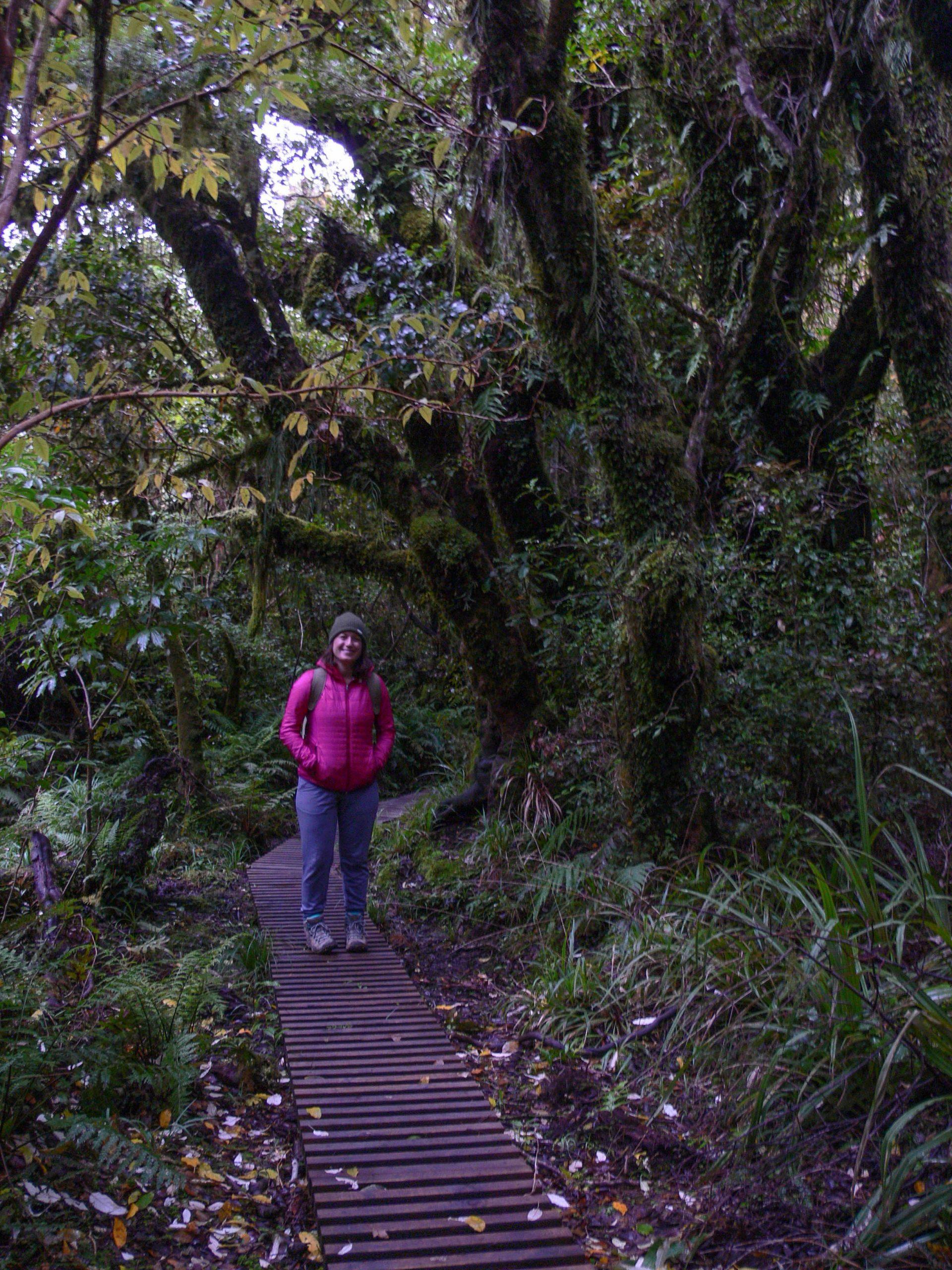 Goblin forest trail Egmont National Park
