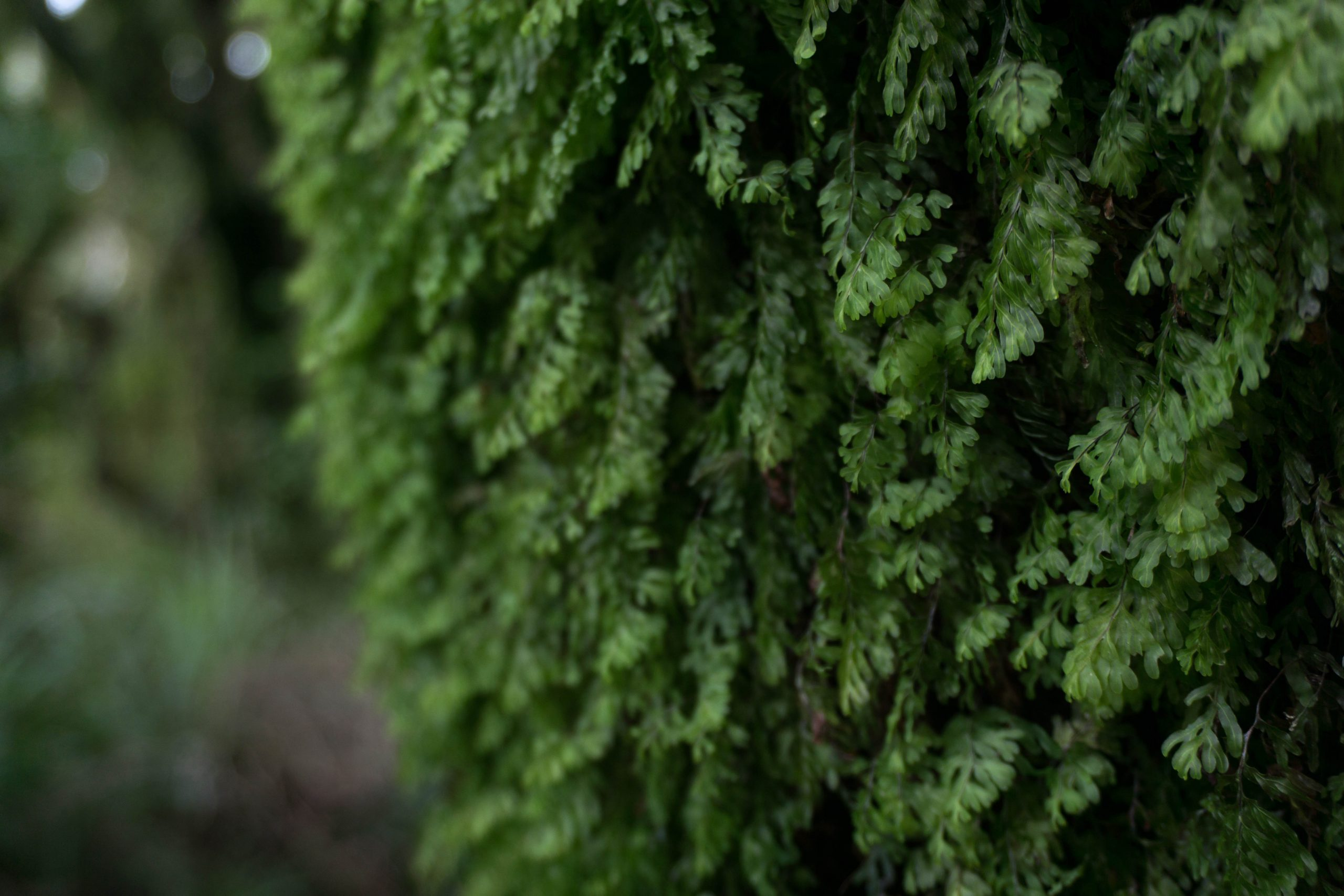 Mossy tree in Egmont National Park