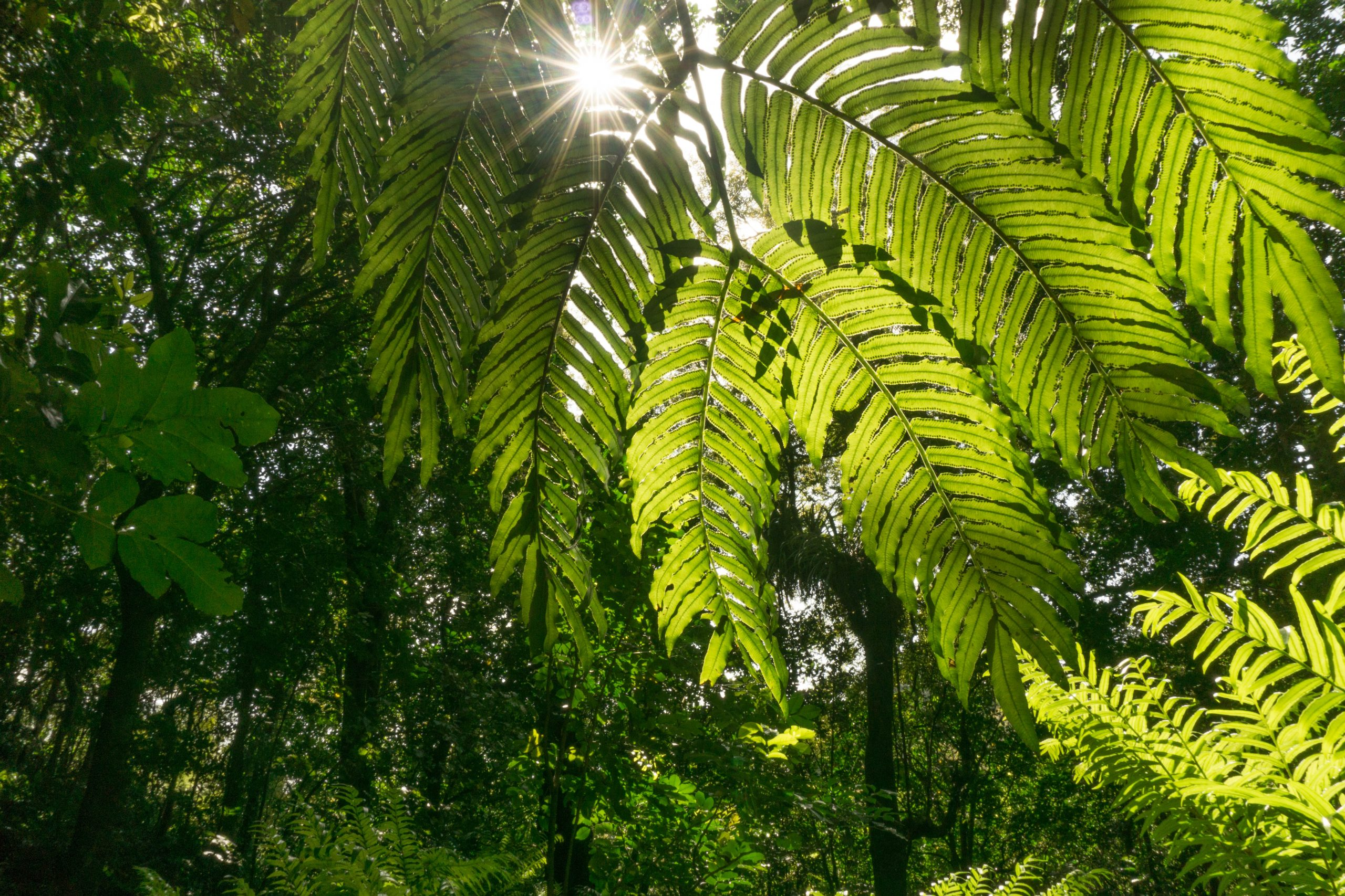 Sunstar in the Ferns at One Burgess Hill in New Plymouth