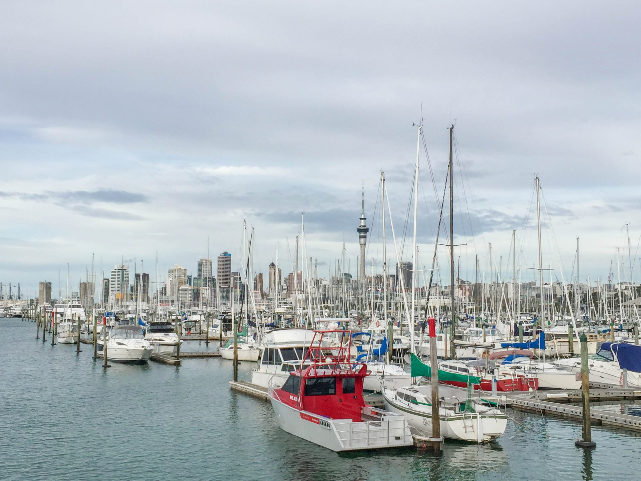 Auckland harbour boats