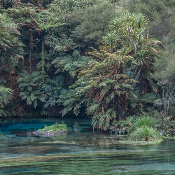 A Fairytale Hike on New Zealand's North Island: The Te Waihou Walkway (Blue Springs)