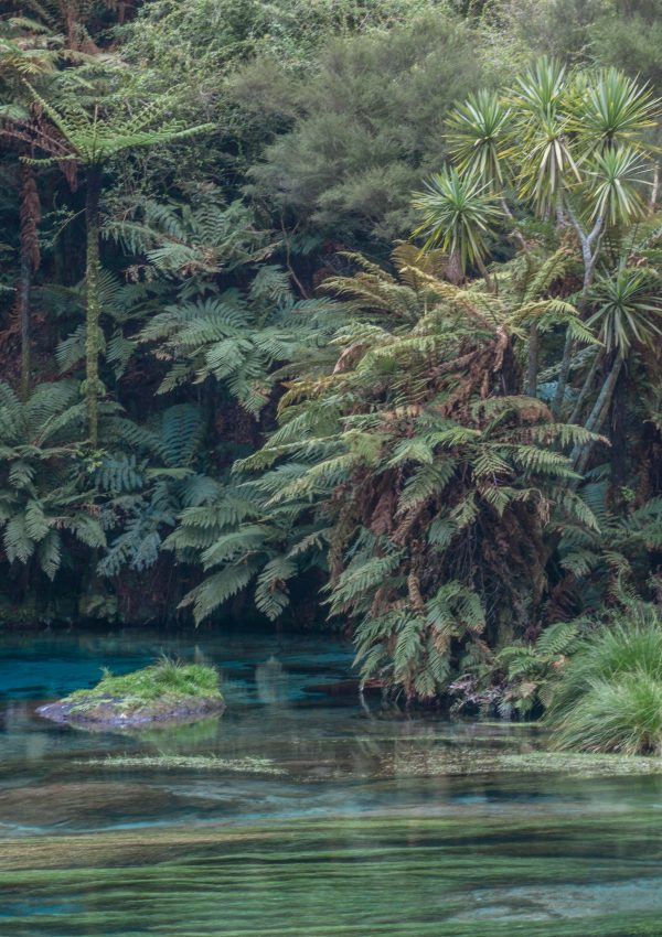 Blue Springs Te Waihou New Zealand