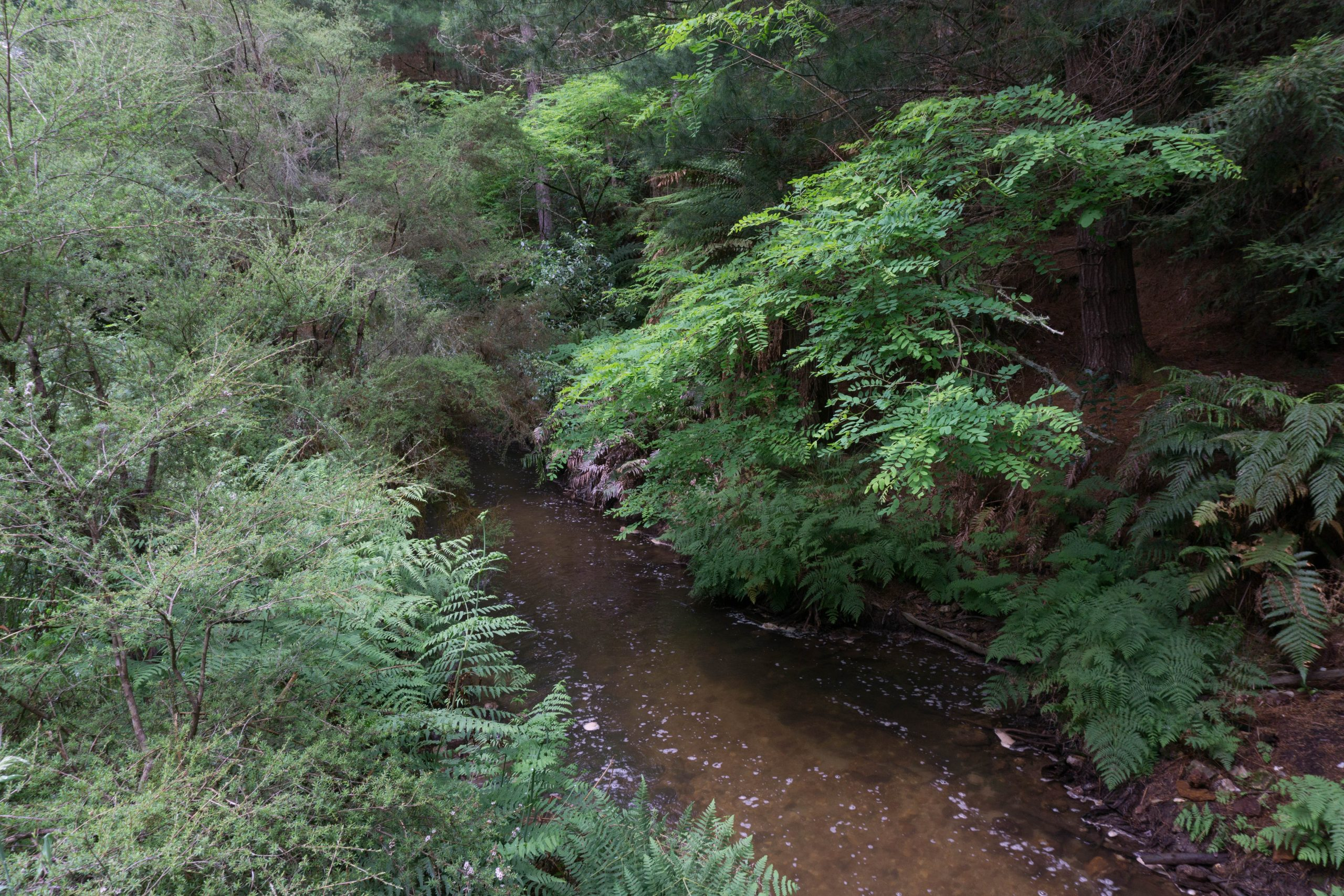 Kerosene Creek Hot Stream Rotorua