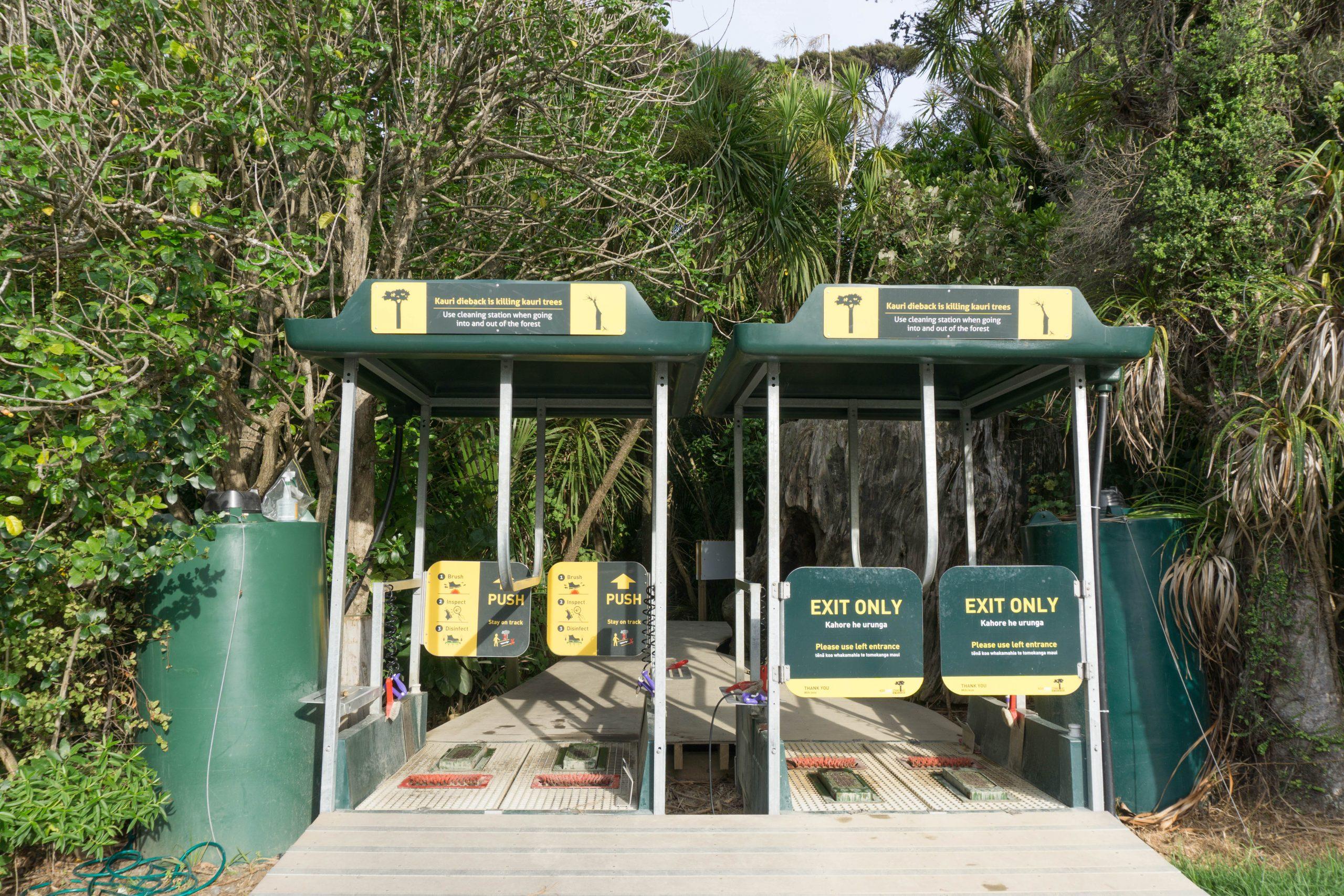 Kauri dieback washing station at Kitekite Falls