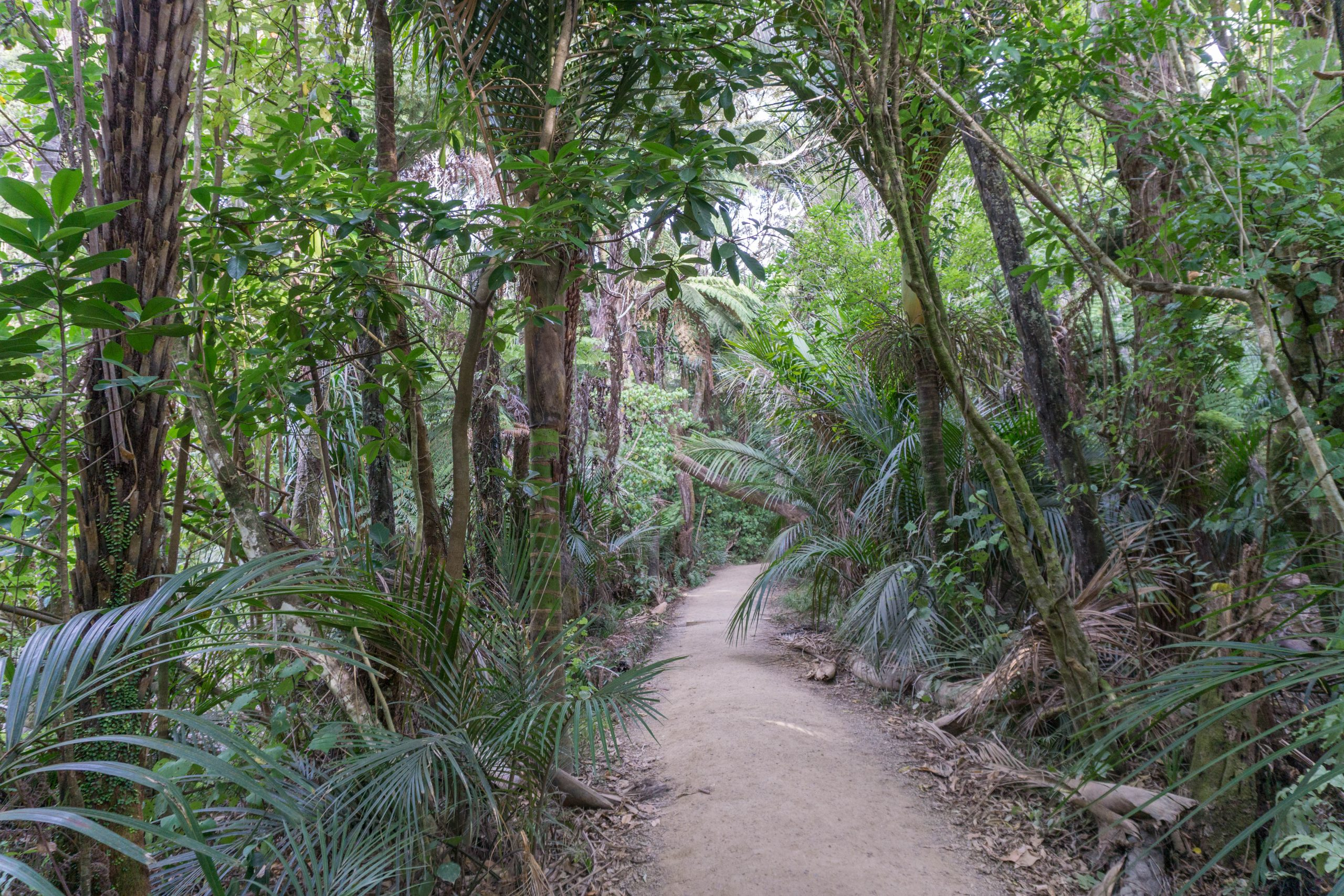 Kitekite-Falls-greenery-and-path