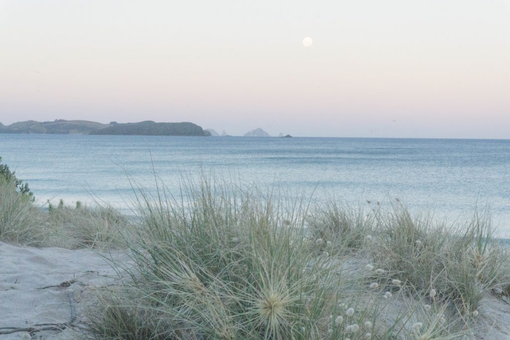 Opoutere Beach - the Most Beautiful Beaches in the Coromandel