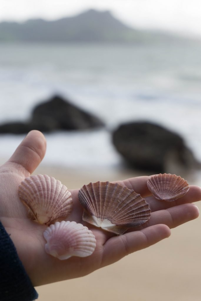 Shells at Lonely Bay Beach in the Coromandel