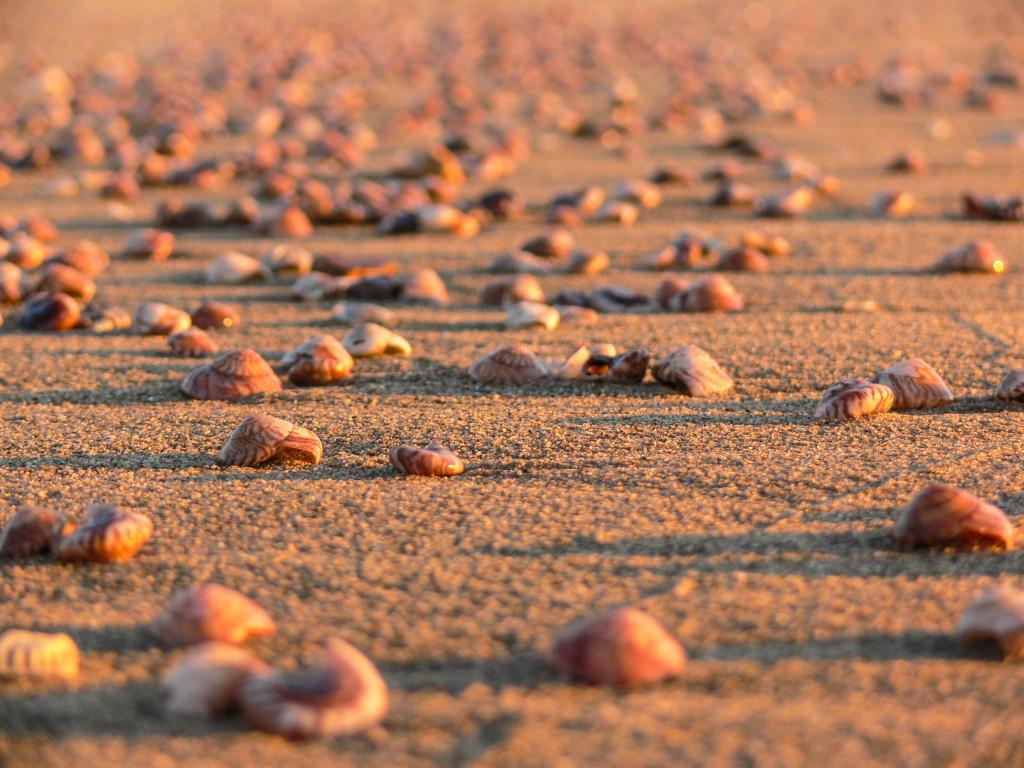 Waihi Beach Shells - the Most Beautiful Beaches in the Coromandel