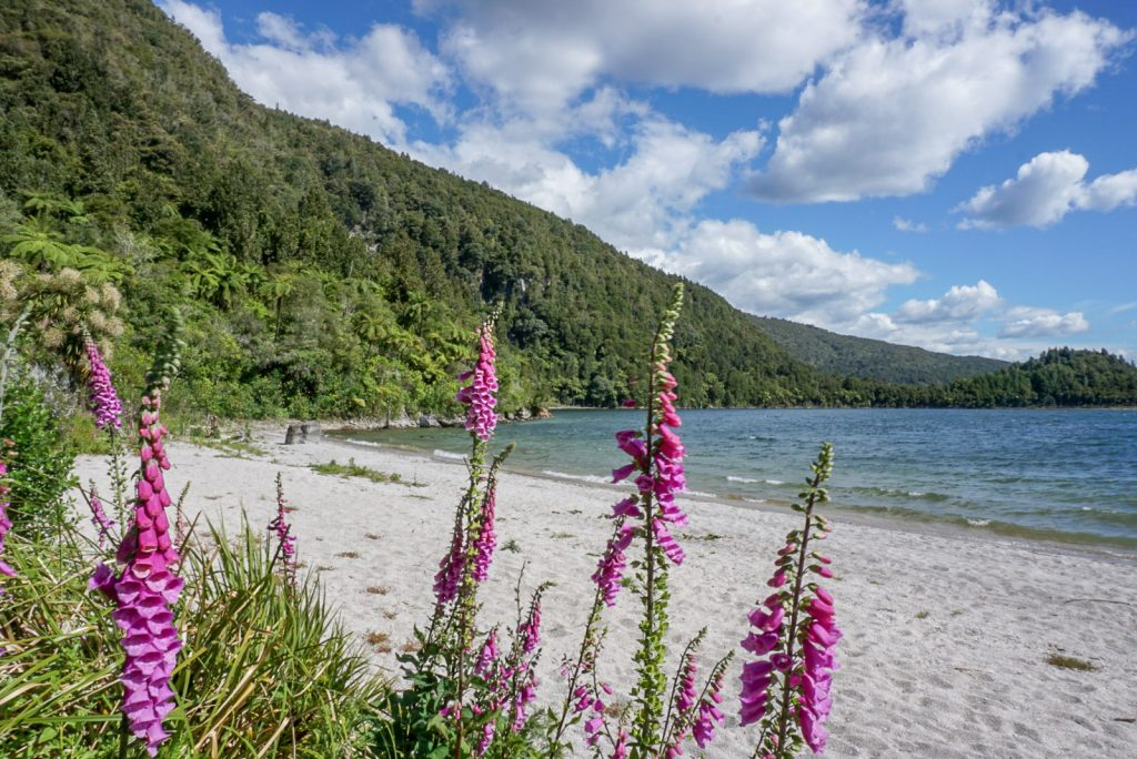 Free Things to do in Rotorua: Lake Okataina