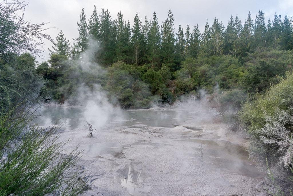Free Things to do in Rotorua: Mud Pool